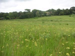 Chelmsford - Minerva Grassland 1